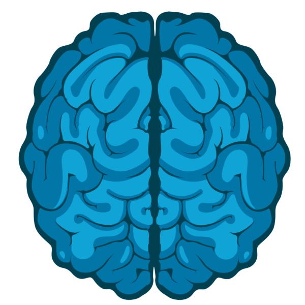 brain img